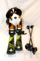 Collection - Dog Skis-6