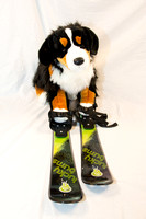 Collection - Dog Skis-5