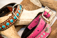 Collection - Dog Collar-6