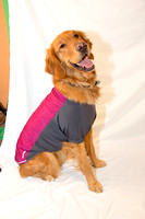 Collection - Dog Jacket-6
